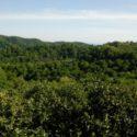 ЛДЗАА. Персиковый рай в заповеднике